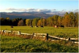 Cows grazing below the hills