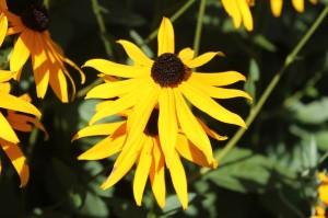September flower show 3