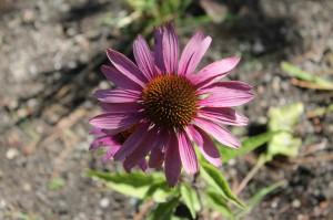 September flower show 1