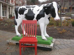 The Red Chair visits with the Sugarbush cow