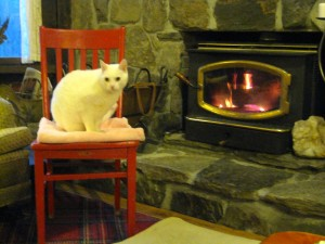 Red Chair warming up and being admired by Snowball at West Hill House B&B