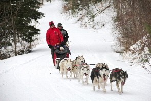 Be the leader of the pack with a Dog sledding excursion!