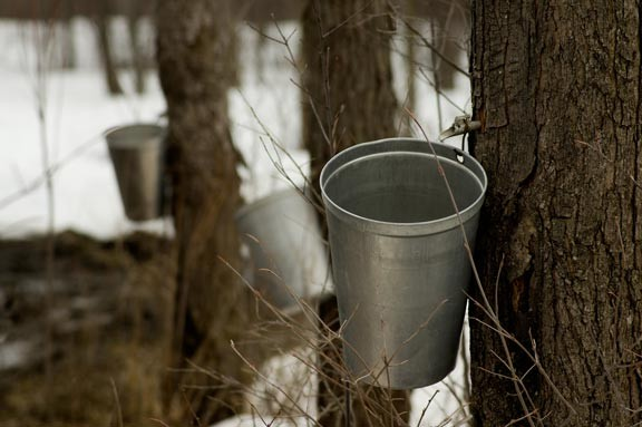 Sugaring Time for Vermont's Pure Maple Syrup