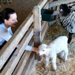 Guest Beckie with Lamb at Shelburne Farms
