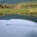 blueberry-lake-by-carmeta-french