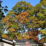 fall-foliage-1