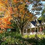 fall-foliage-10