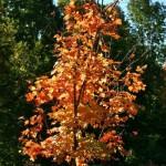 fall-foliage-11