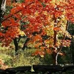 fall-foliage-12