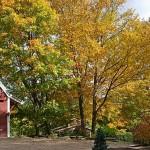 fall-foliage-18