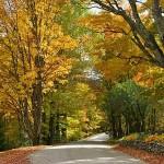 fall-foliage-19