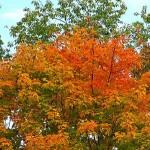 fall-foliage-21