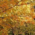 fall-foliage-23