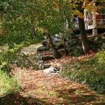 fall-foliage-24