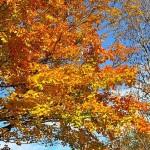 fall-foliage-26