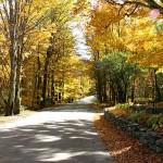 fall-foliage-27