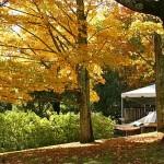 fall-foliage-28