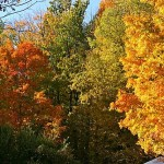 fall-foliage-29