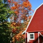 fall-foliage-3