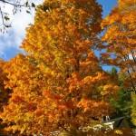 fall-foliage-30