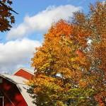 fall-foliage-31