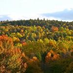 fall-foliage-32