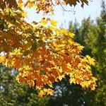 fall-foliage-4