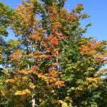 fall-foliage-5