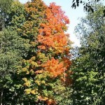fall-foliage-6