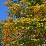 fall-foliage-8