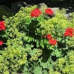 summer-flowers10-10