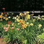 summer-flowers10-2