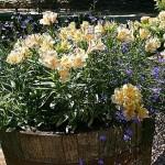 summer-flowers10-5