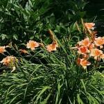 summer-flowers10-6