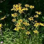 summer-flowers10-7