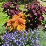 summer-flowers10-8