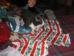 Helping with wrapping paper.