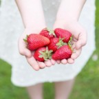 Mad River Valley Strawberry Festival