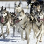 Enjoy a Vermont Dog Sledding Adventure at West Hill House B&B!