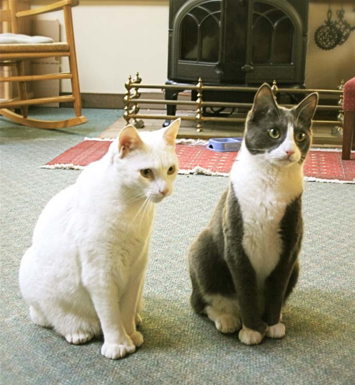 Our Cats - Snowball & Smoky