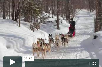 Dog Team Movie