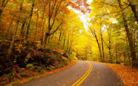 Vermont Fall Road