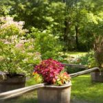 Inn garden flowers