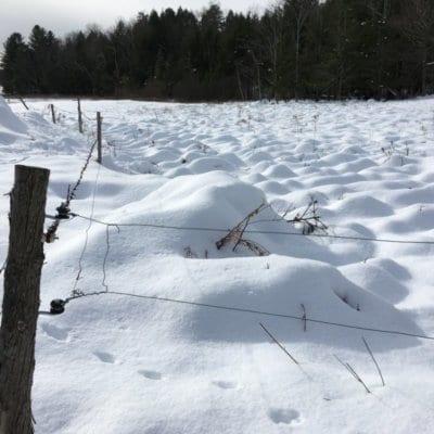 Field of snow