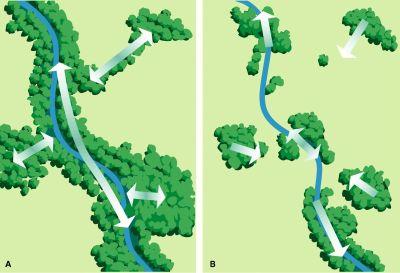 Wildlife Corridor design