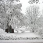 Winter in Vermont Just Keeps Getting More Magical! - Heavy snow on the tree branches