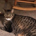Our cat Tigger