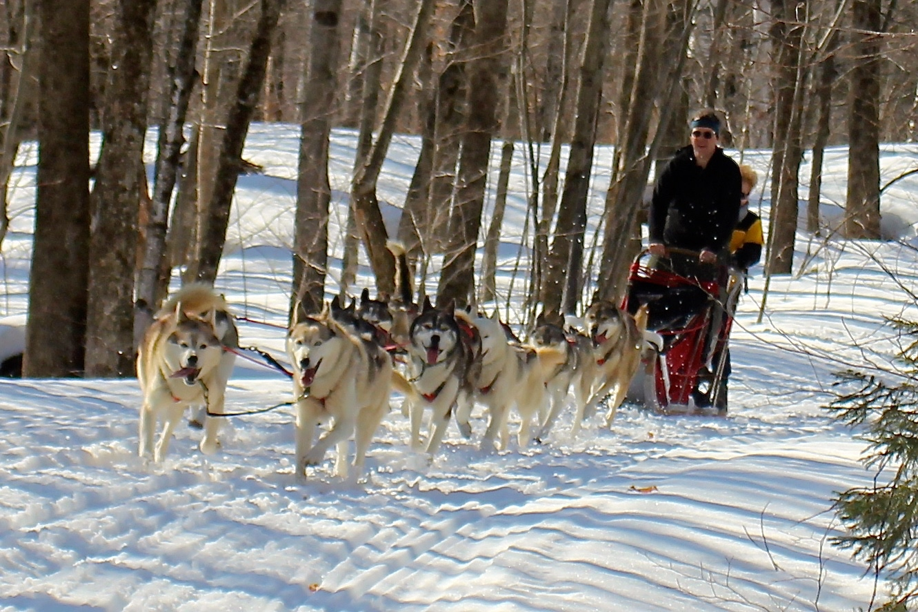 Dog sledding in Vermont is a delightful pastime.